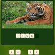 Play Zoo Trivia free