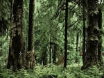 Play Ewoks Annihilation free