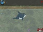 Play Killer Whale Willy free