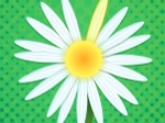Game Daisy Petals