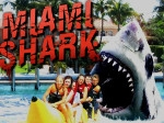 Game Miami Shark